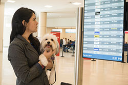 photo of a woman checking arrivals and departures screen